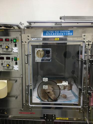 南臺灣第一台可以恆溫恆溼的小動物專用ICU病房,提供24小時不間斷的氧氣。