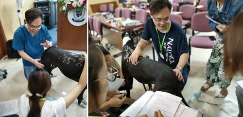 周明賢獸醫師當起復健助教,現場示範與講解。