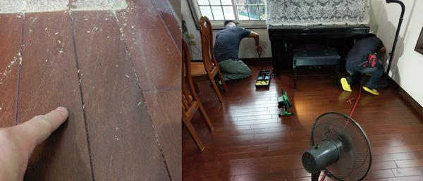 和室地板滿佈白蟻!時間拖得越久,啃食的狀況更嚴重,影響生活環境品質。