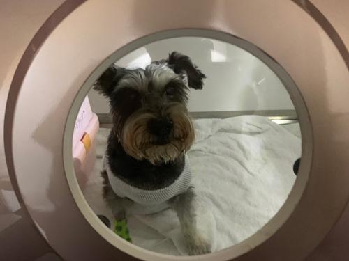 不是每隻寵物都適合高壓氧治療,恩澤動物醫院都會事先檢查、謹慎評估。