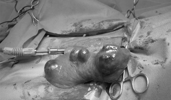 恩澤動物醫院的寵物腫瘤案例:黃金獵犬BUBU有嚴重的脾臟腫瘤。