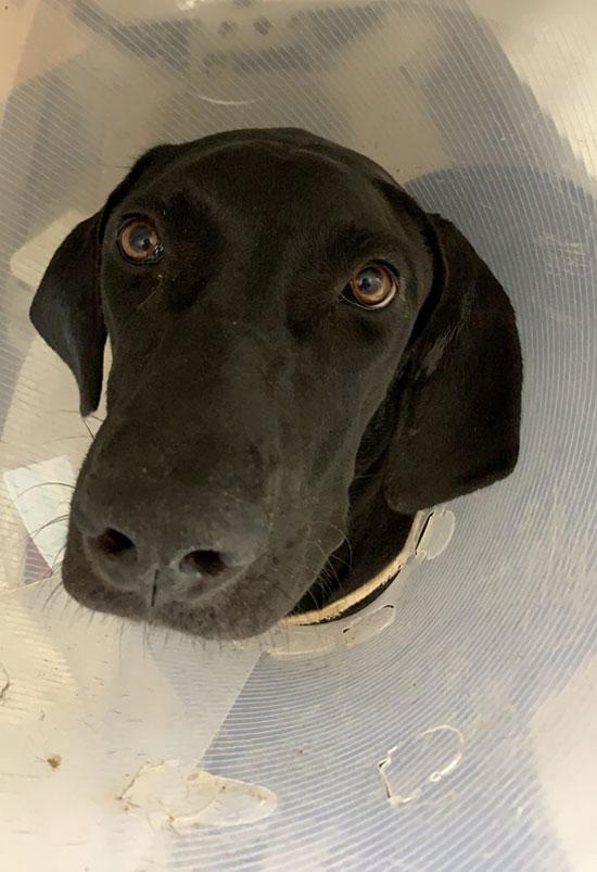 恩澤動物醫院宣導:犬貓內分泌失調、原因很複雜,必須找出致病源頭。