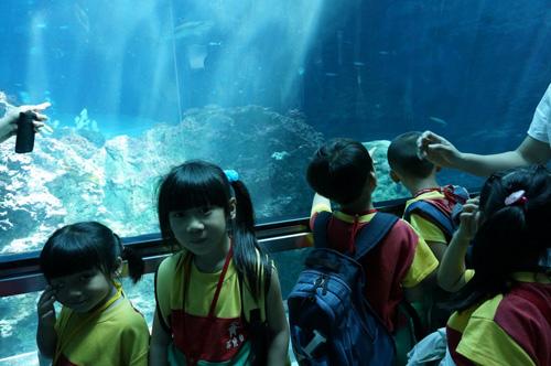 幼儿园窗户玻璃布置图片海底世界