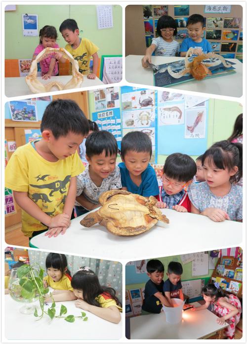 孩子的學習不能總是紙上談兵!為此,乖寶貝幼兒園用心準備了鯊魚齒骨還有海龜標本,並透過實驗、操作和觀察帶孩子們一同認識海洋世界!