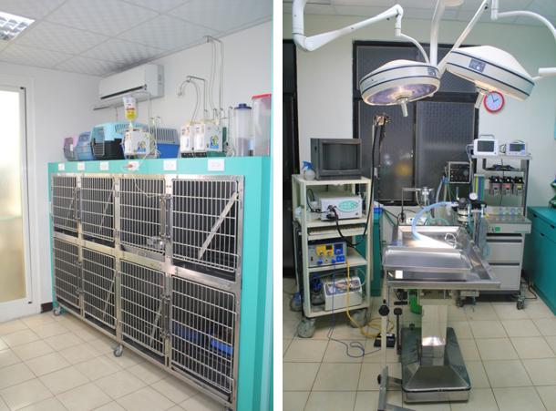 台南,動物醫院,野生動物醫院