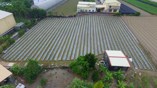 外觀像農地的建地,出租給鄰居種辣椒,一年租金收入僅2萬元。