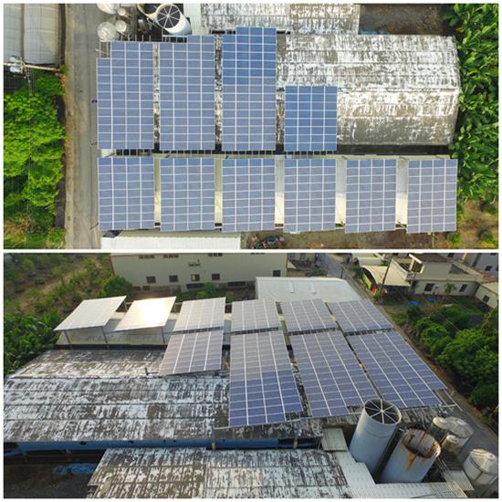 豬舍屋頂種電不僅多了種電收入,還能隔熱降溫、豬隻「換肉率」提高!
