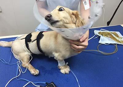 高雄,台南,動物醫院,野生動物醫院,貓醫院,狗醫院